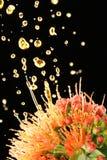 O óleo do aroma distrilled da flor fotografia de stock