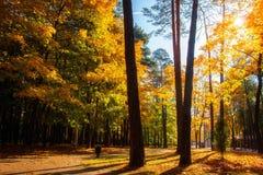 o Δασικό πάρκο φθινοπώρου Κίτρινα δέντρα τοπίου E στοκ φωτογραφία με δικαίωμα ελεύθερης χρήσης