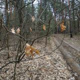 o Παλαιά, δρύινα φύλλα του περασμένου χρόνου στοκ φωτογραφίες με δικαίωμα ελεύθερης χρήσης