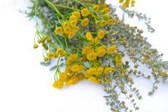 o 蒿木,艾菊药用植物和花花束  开花的苦艾 药用植物 背景迷离 免版税库存照片