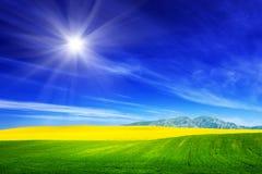 Τομέας άνοιξη της πράσινης χλόης και των κίτρινων λουλουδιών, βιασμός μπλε ουρανός ηλιόλουστ&o Στοκ Φωτογραφία