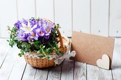 O açafrão bonito floresce em uma cesta perto do cartão vazio para seu texto no fundo de madeira Fotos de Stock Royalty Free
