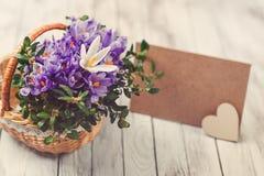 O açafrão bonito floresce em uma cesta perto do cartão vazio para seu texto no fundo de madeira toned Imagem de Stock