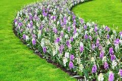 O açafrão colorido floresce a flor no jardim da mola Imagem de Stock Royalty Free