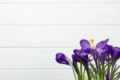 O açafrão roxo da flor nas folhas do potenciômetro é fundo de madeira branco do estame verde do pistilo das folhas Fotos de Stock Royalty Free
