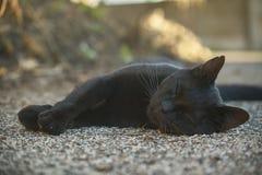 O açaime de um gato preto Foto de Stock Royalty Free
