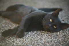 O açaime de um gato preto Fotografia de Stock Royalty Free