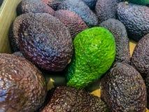 O abacate igualmente refere o fruto do ` s da árvore de abacate, que é botanicamente uma grande baga que contém uma única semente foto de stock