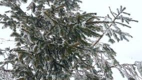 O abeto balança no vento sobre uma montanha nevado vídeos de arquivo