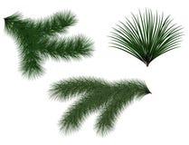 O abeto das árvores e das grinaldas de Natal do verde do ano novo ramifica com agulhas longas Imagem de Stock