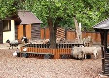 O abrigo de animais hoofed doméstico em um jardim zoológico imagem de stock