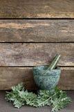 O absinto fresco Herb Leaves com o almofariz e o pilão de mármore verdes imagens de stock royalty free