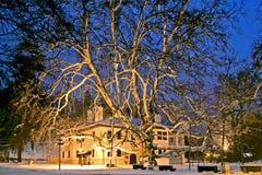 O acerifolia do Platanus do plano de Londres Opinião da noite foto de stock royalty free