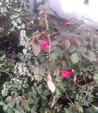 o ADN das folhas aumentou flor da natureza imagem de stock royalty free