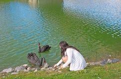 O adolescente alimenta cisnes pretas Fotos de Stock Royalty Free