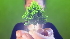 O adolescente com tranças, aumenta uma árvore pequena em suas mãos, metragem ideal para temas como o ambiente e ecologia foto de stock royalty free