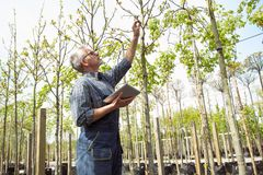 O agrônomo adulto examina as plântulas que alteram genetically plantas As mãos que guardam a tabuleta Nos vidros, uma barba, vest imagem de stock royalty free