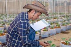 O agrônomo examina as plântulas crescentes do melão na exploração agrícola, nos fazendeiros e nos pesquisadores na análise da pla imagens de stock