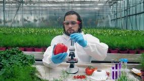 O agrônomo masculino está enchendo a pimenta vermelha com o líquido químico video estoque