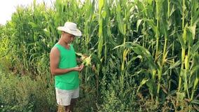O agrônomo novo verifica a grão do milho para ver se há a qualidade video estoque