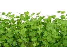 O agrião fresco do verão, salada saudável decora o alimento Imagens de Stock Royalty Free