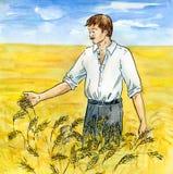 O agricultor em um campo wheaten Fotos de Stock