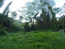 O& x27; ahuHawaii Manoa nedgångar Hawai& x27; I Arkivfoton