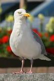 O Albatross Fotos de Stock