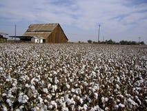 O algodão coloca a HOME traseira Imagens de Stock
