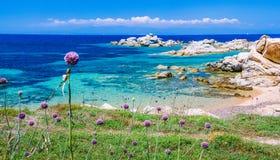 O alho-porro da cebola selvagem que cresce entre o granito balança na ilha bonita de Sardinia O azul vê e uma outra ilha no fundo fotografia de stock