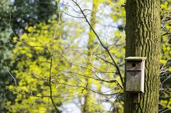 O alimentador do pássaro pendurou em uma árvore entre as folhas altas Imagens de Stock