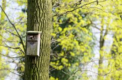 O alimentador do pássaro pendurou em uma árvore entre as folhas altas Fotografia de Stock Royalty Free