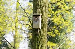 O alimentador do pássaro pendurou em uma árvore entre as folhas altas Foto de Stock Royalty Free