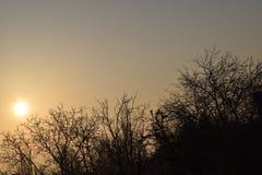 O alvorecer o sol as árvores Imagens de Stock Royalty Free