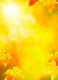 O amarelo abstrato do outono da arte deixa o fundo Fotografia de Stock Royalty Free