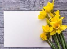 O amarelo bonito floresce narcisos amarelos em um fundo de madeira cinzento O Livro Branco, apronta-se para seu texto fotografia de stock