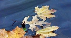 O amarelo brilhante sae na água em um parque no outono Fotografia de Stock Royalty Free