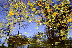 O amarelo caído deixa a água Imagens de Stock Royalty Free