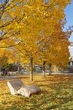 O amarelo da cadeira deixa o outono Fotos de Stock Royalty Free