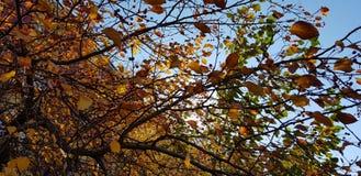 O amarelo das folhas de outono murcha a luz solar fotos de stock royalty free