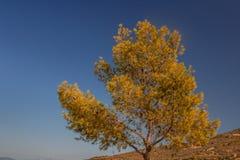 O amarelo deixa a árvore e o céu fotografia de stock royalty free