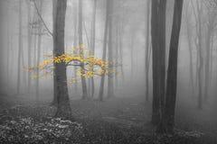 O amarelo deixa a árvore na floresta nevoenta Imagens de Stock