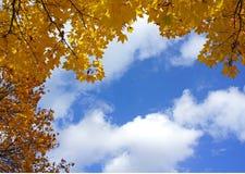 O amarelo deixa o outono do céu azul Fotografia de Stock