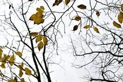 O amarelo deixa ramos de árvore fotos de stock royalty free