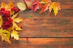 O amarelo do bordo do outono sae e bagas no fundo de madeira Fotos de Stock