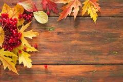 O amarelo do bordo do outono sae e bagas no fundo de madeira Imagens de Stock Royalty Free