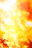 O amarelo do outono deixa o fundo Imagem de Stock Royalty Free