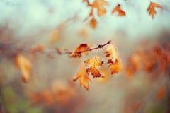 O amarelo do outono sae, profundidade de campo rasa Os últimos dias antes do inverno Fotos de Stock Royalty Free