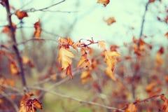 O amarelo do outono sae, profundidade de campo rasa Os últimos dias antes do inverno Imagem de Stock Royalty Free