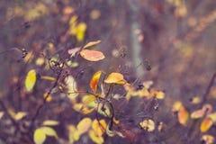 O amarelo do outono sae, profundidade de campo rasa Os últimos dias antes do inverno Imagem de Stock